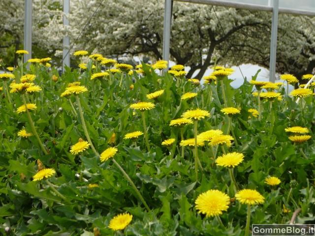 Pneumatici Bridgestone: dai fiori alla gomma 2